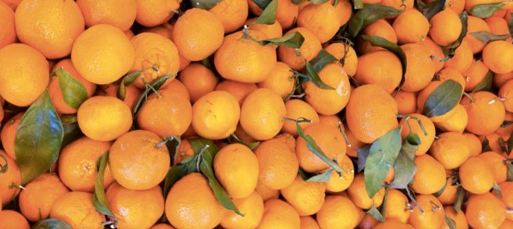 Fremont – Mandarins